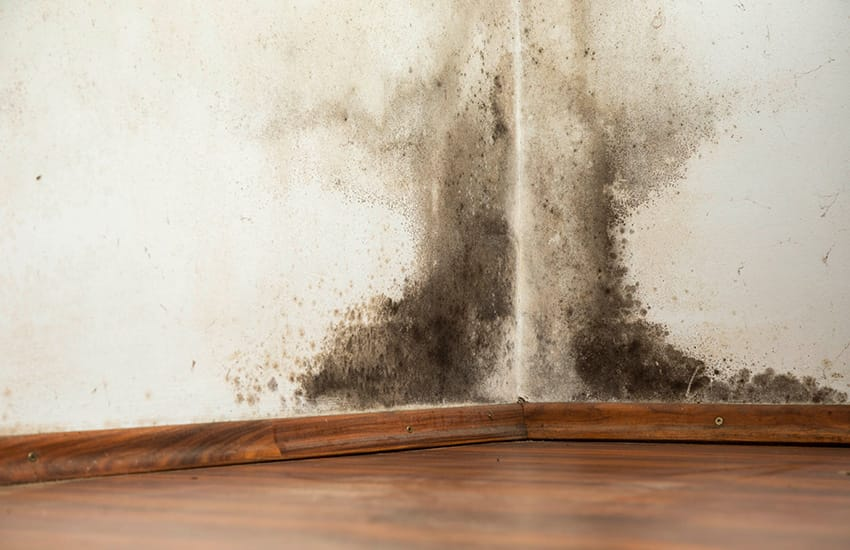 A Beginner's Guide to Black Spot Mould – Causes, Problems and Solutions