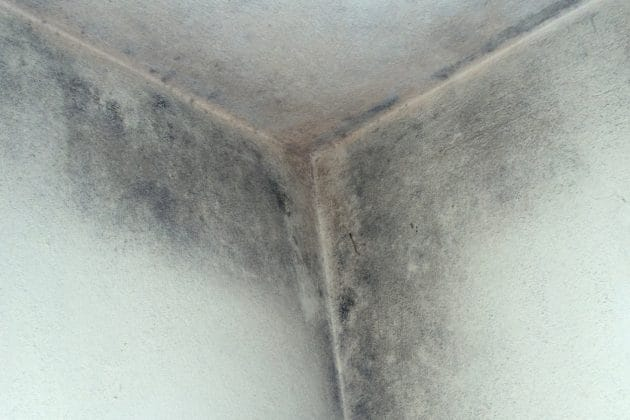 Why Do You Get Damp and Mould?