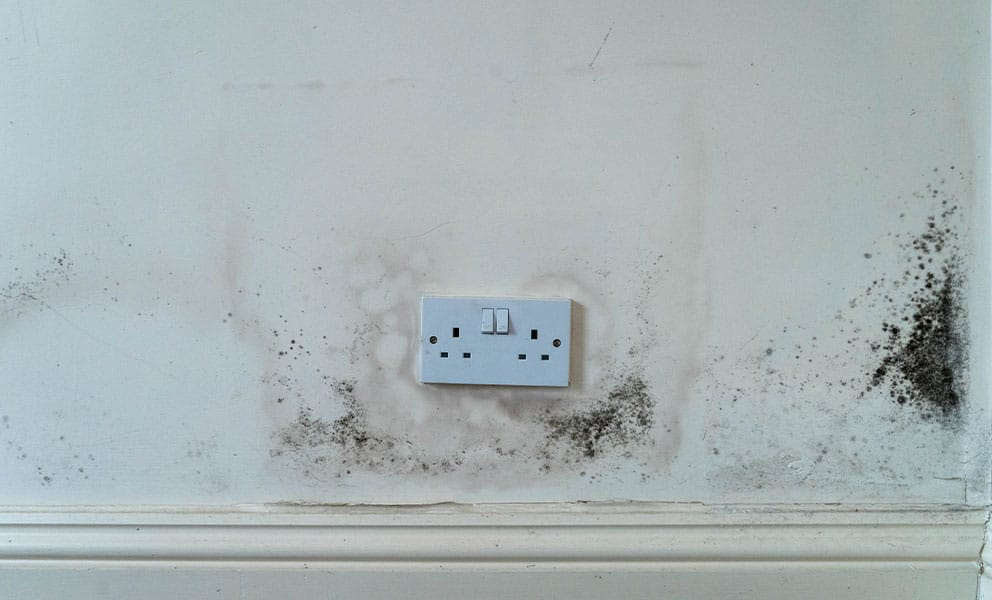 7 Benefits of Using SprayCork to Combat Mould