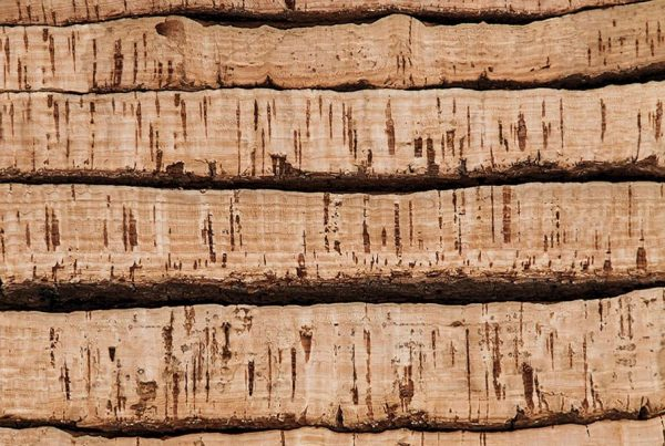 What Are the Physical Properties of Cork?